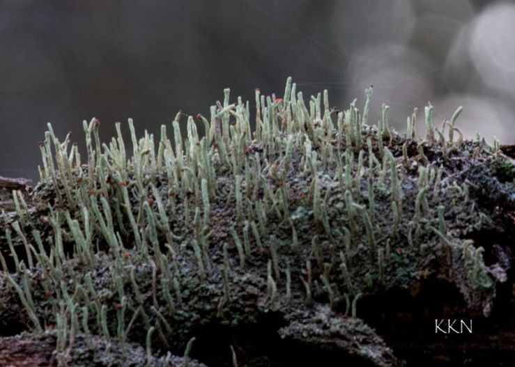 Lichen World
