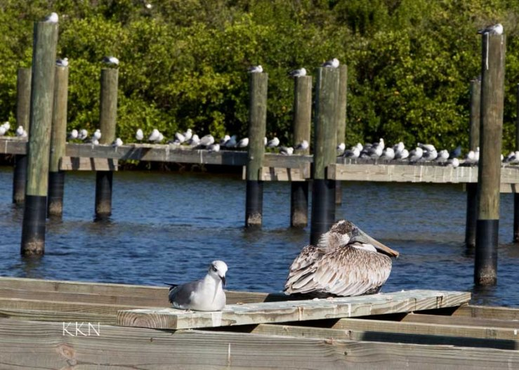 birds on dock