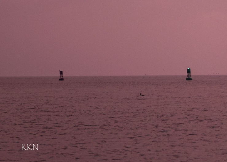 Buoy 1
