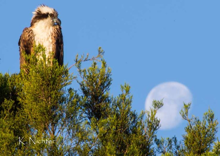 Osprey Moon Eagle Point