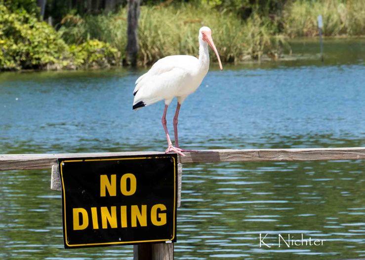 No Dining