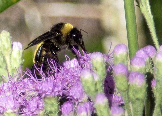 BCP Hike Bee