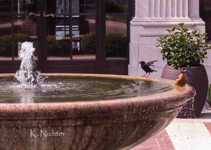 g16 fountain birdbath