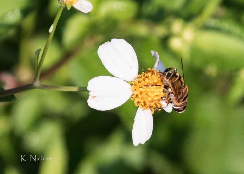 RSSP bee