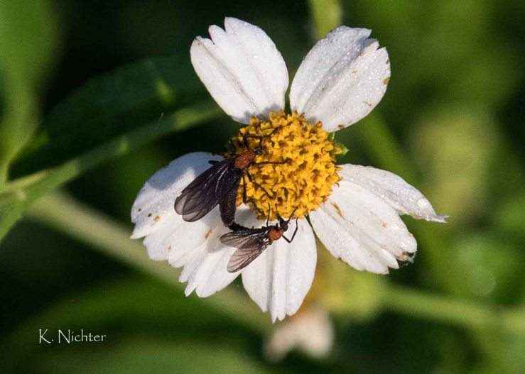 RSSP Love Bugs