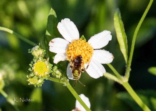 RSSP wasp