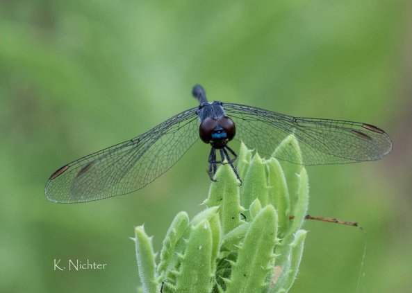 20191007 dragonfly