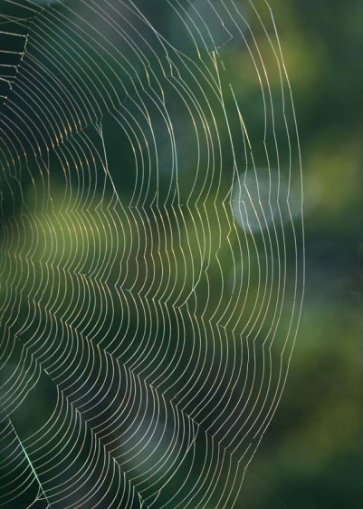 Spider web morning light