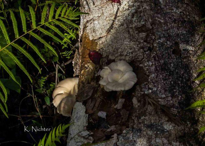 Tree Fungus light and dark