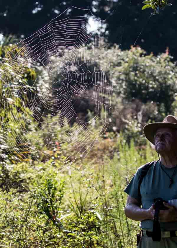 Karl and the spider web